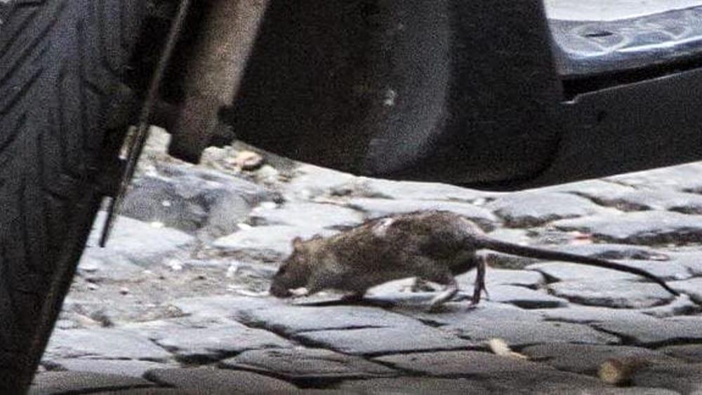 Animali infestanti: cosa fare per proteggere le abitazioni